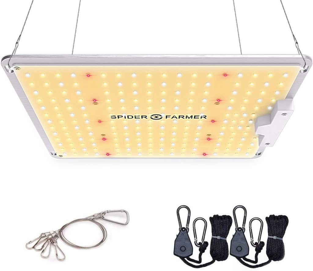 Best LED Grow Light for the Money